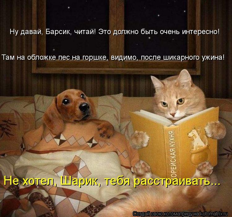 Котоматрица: Ну давай, Барсик, читай! Это должно быть очень интересно! Там на обложке пес на горшке, видимо, после шикарного ужина! Не хотел, Шарик, тебя ра