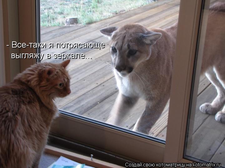 Котоматрица - - Все-таки я потрясающе  выгляжу в зеркале...
