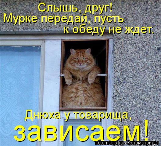 Котоматрица: Слышь, друг!  Мурке передай, пусть  к обеду не ждет. Днюха у товарища,  зависаем!