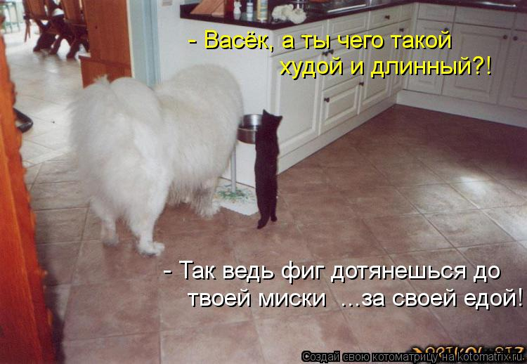 Котоматрица - - Васёк, а ты чего такой худой и длинный?! - Так ведь фиг дотянешься д