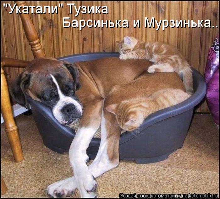 """Котоматрица: """"Укатали"""" Тузика Барсинька и Мурзинька..."""