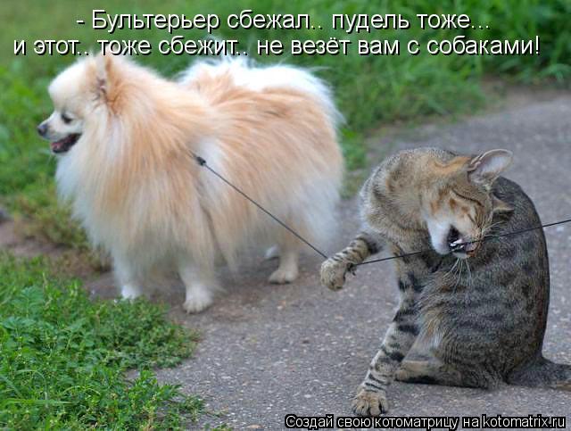 Котоматрица: - Бультерьер сбежал.. пудель тоже... и этот.. тоже сбежит.. не везёт вам с собаками!