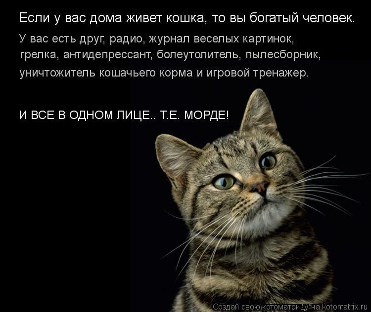 Котоматрица: Если у вас дома живет кошка, то вы богатый человек. У вас есть друг, радио, журнал веселых картинок, грелка, антидепрессант, болеутолитель, пы
