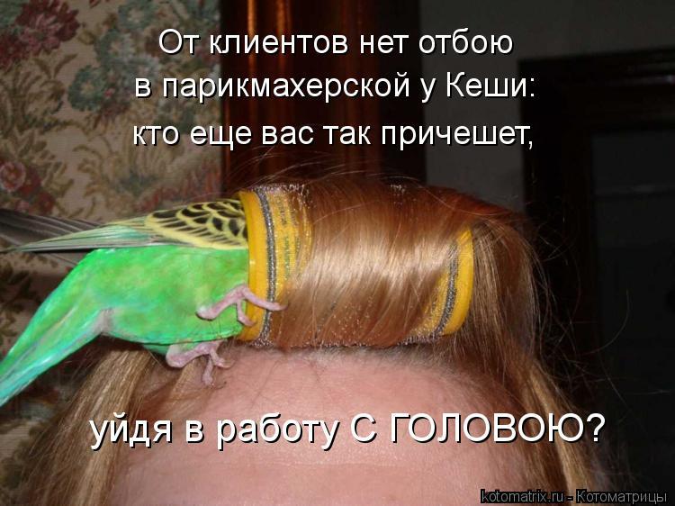 Котоматрица: От клиентов нет отбою в парикмахерской у Кеши: кто еще вас так причешет, уйдя в работу С ГОЛОВОЮ?