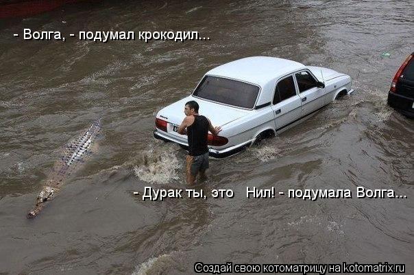 Котоматрица: - Дурак ты, это   Нил! - подумала Волга...  - Волга, - подумал крокодил...