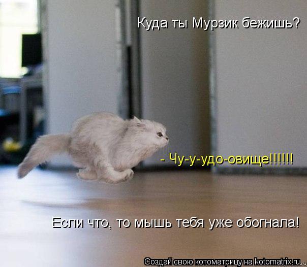 Котоматрица: Куда ты Мурзик бежишь? Если что, то мышь тебя уже обогнала! - Чу-у-удо-овище!!!!!!