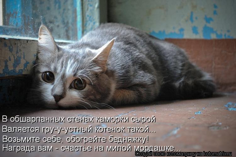 Котоматрица: В обшарпанных стенах каморки сырой Валяется гру-у-устный котенок такой... Возьмите себе, обогрейте бедняжку! Награда вам - счастье на милой м