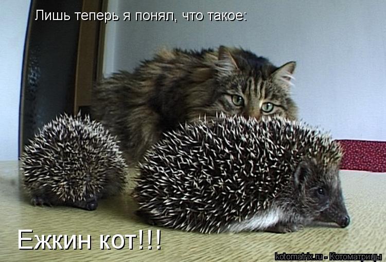 Котоматрица: Лишь теперь я понял, что такое: Ежкин кот!!!