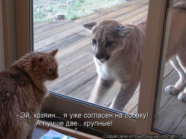 Котоматрица: - Эй, хозяин... я уже согласен на собаку! А лучше две.. крупные!