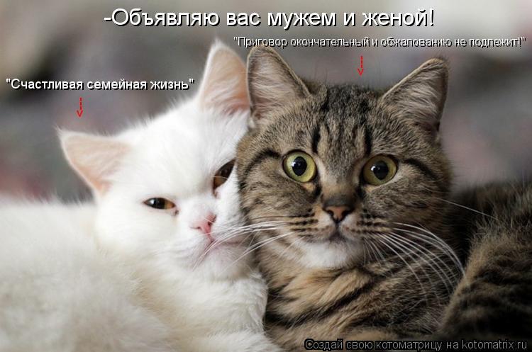 """Котоматрица: -Объявляю вас мужем и женой! <--- <--- """"Счастливая семейная жизнь"""" """"Приговор окончательный и обжалованию не подлежит!"""""""