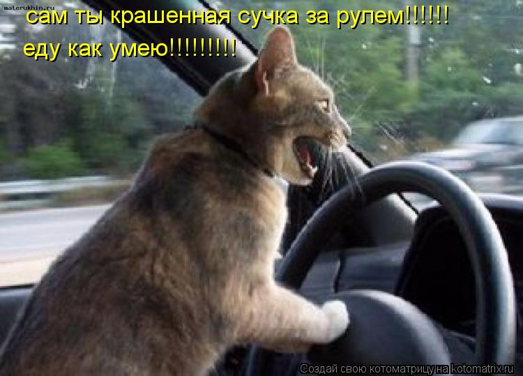 Котоматрица: сам ты крашенная сучка за рулем!!!!!! еду как умею!!!!!!!!!