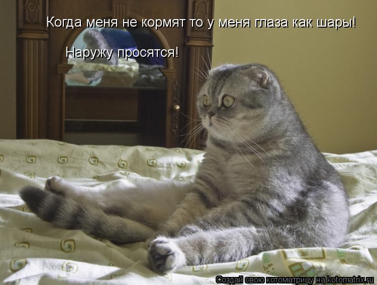 Котоматрица: Когда меня не кормят то у меня глаза как шары! Наружу просятся!