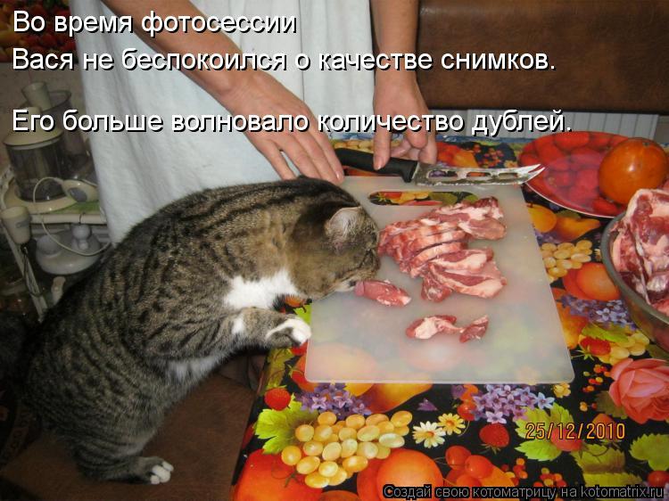 Котоматрица - Во время фотосессии Вася не беспокоился о качестве снимков. Его больше