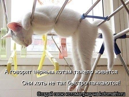 Котоматрица: А говорят чёрным котам тяжело живется  Они хоть не так быстро пачкаются!
