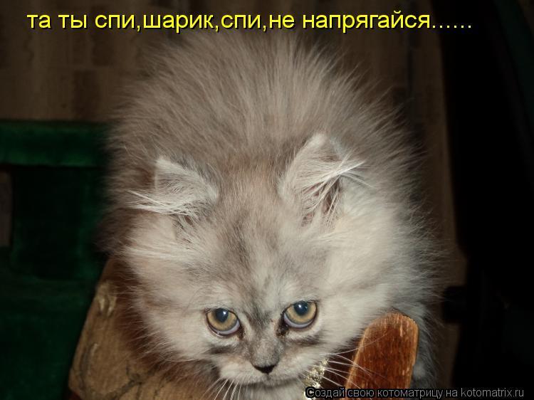 Котоматрица: та ты спи,шарик,спи,не напрягайся......