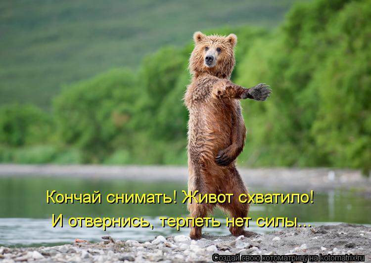 Котоматрица: Кончай снимать! Живот схватило! И отвернись, терпеть нет силы...