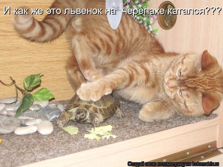 Котоматрица - И как же это львенок на  черепахе катался???