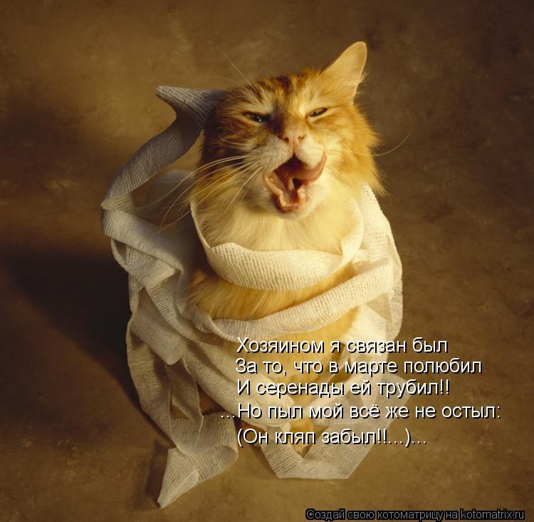 Котоматрица: Хозяином я связан был За то, что в марте полюбил И серенады ей трубил!! ...Но пыл мой всё же не остыл: (Он кляп забыл!!...)...