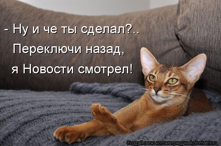 Котоматрица - - Ну и че ты сделал?.. Переключи назад, я Новости смотрел!
