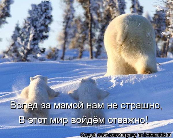 Котоматрица: Вслед за мамой нам не страшно, В этот мир войдём отважно!