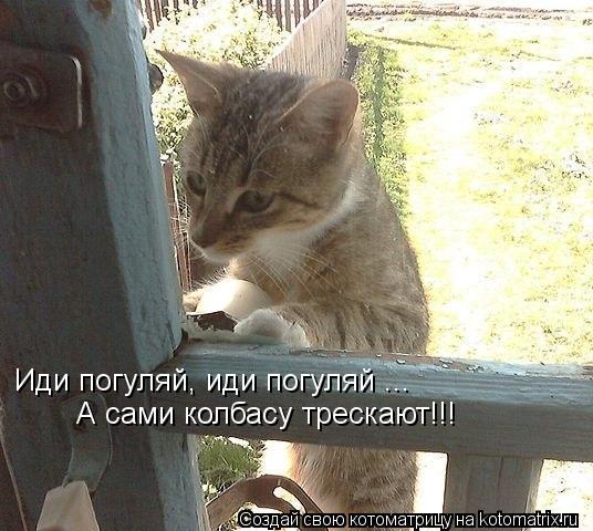 Котоматрица: Иди погуляй, иди погуляй ...   А сами колбасу трескают!!!