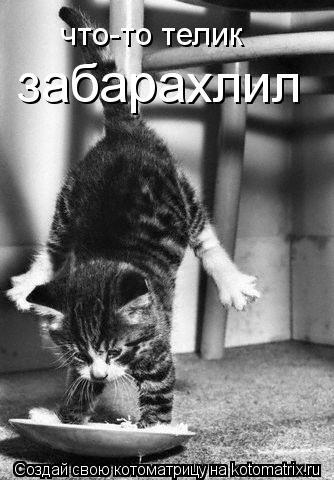Питомник британских кошек elite pride представляет помет с подробнее на сайте http://fotina-16narodru/cattery of