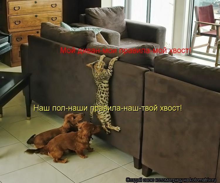 Котоматрица: Мой диван-мои правила-мой хвост! Наш пол-наши правила-наш-твой хвост!