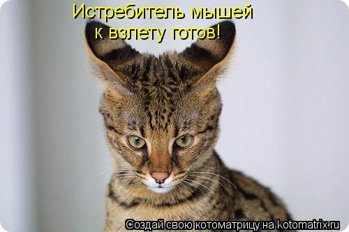 Котоматрица: Истребитель мышей к взлету готов!