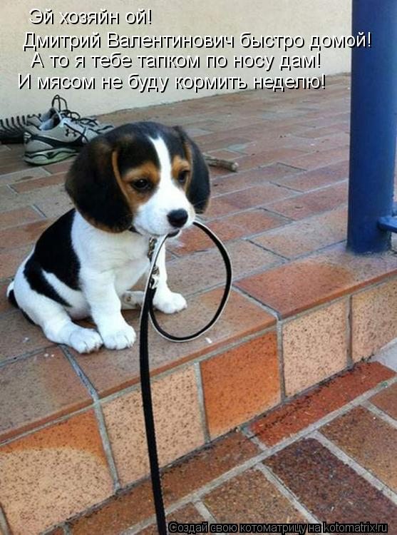 Котоматрица: Эй хозяйн ой! Дмитрий Валентинович быстро домой! А то я тебе тапком по носу дам! И мясом не буду кормить неделю!