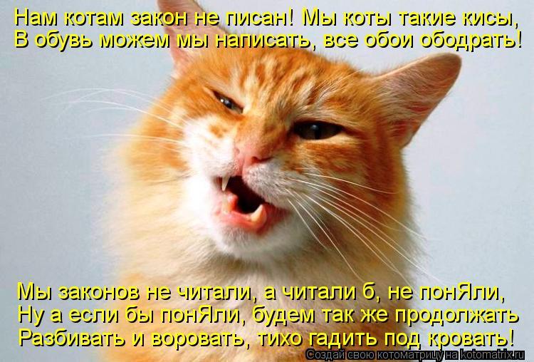 Котоматрица: Нам котам закон не писан! Мы коты такие кисы, В обувь можем мы написать, все обои ободрать! Мы законов не читали, а читали б, не понЯли, Ну а есл