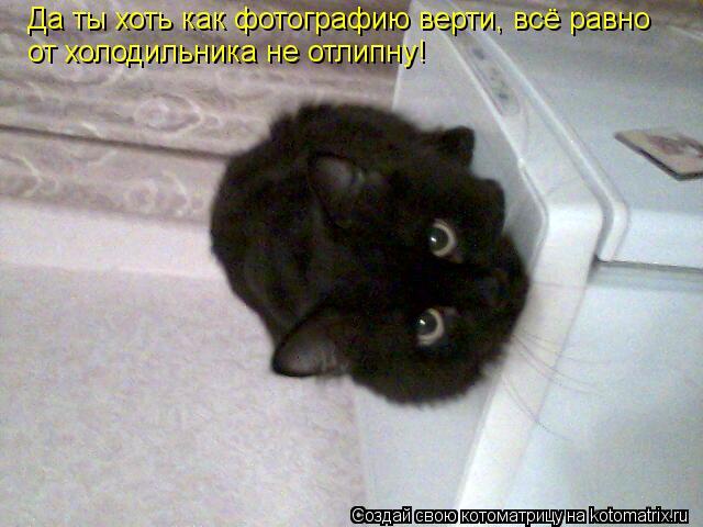 Котоматрица: Да ты хоть как фотографию верти, всё равно от холодильника не отлипну!