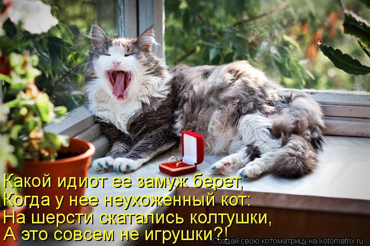 Котоматрица: Какой идиот ее замуж берет,  Когда у нее неухоженный кот: На шерсти скатались колтушки, А это совсем не игрушки?!