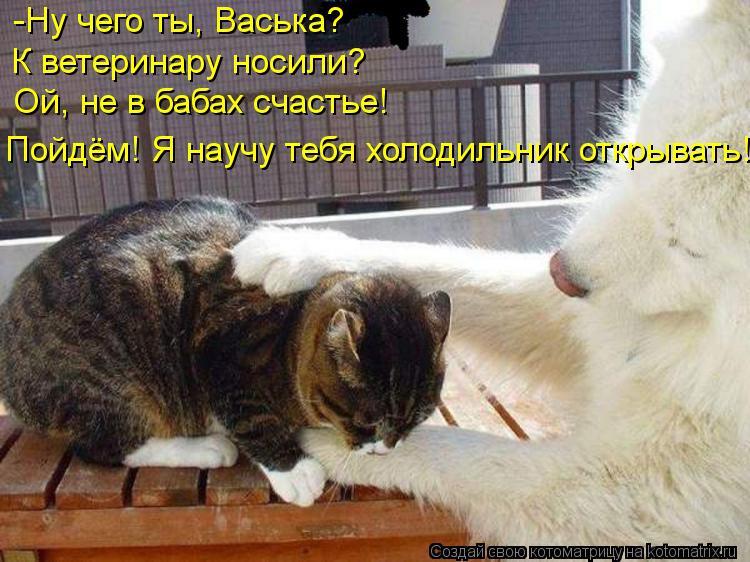 Котоматрица: -Ну чего ты, Васька? К ветеринару носили? Ой, не в бабах счастье! Пойдём! Я научу тебя холодильник открывать!