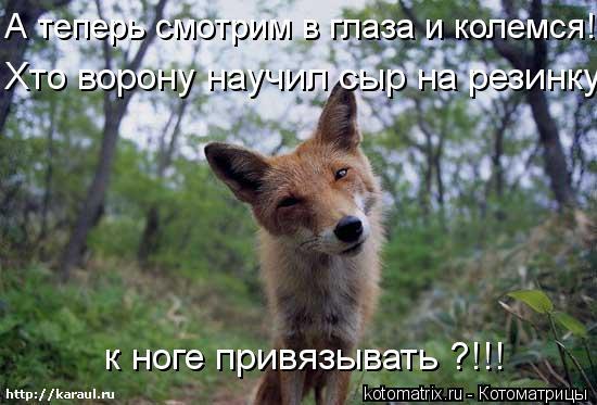 Котоматрица: А теперь смотрим в глаза и колемся! к ноге привязывать ?!!! Хто ворону научил сыр на резинку