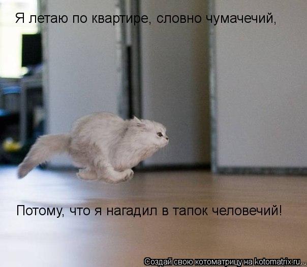 Котоматрица: Я летаю по квартире, словно чумачечий, Потому, что я нагадил в тапок человечий!