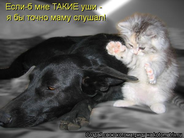 Котоматрица - Если-б мне ТАКИЕ уши -  я бы точно маму слушал!