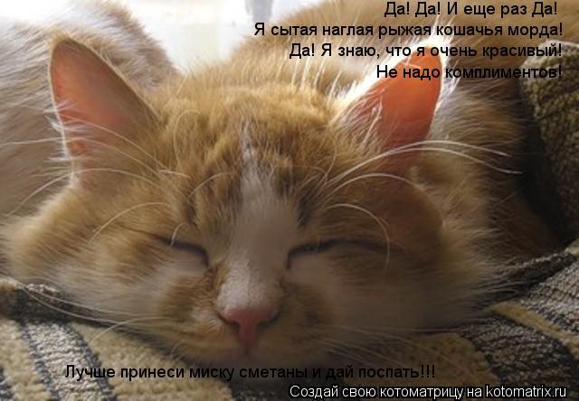 Наглая кошачья морда фото 546-51