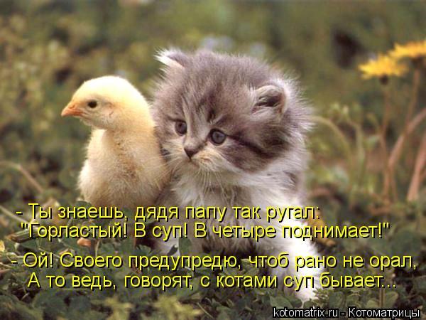 """Котоматрица: - Ты знаешь, дядя папу так ругал:  - Ой! Своего предупредю, чтоб рано не орал,  А то ведь, говорят, с котами суп бывает...  """"Горластый! В суп! В четыр"""
