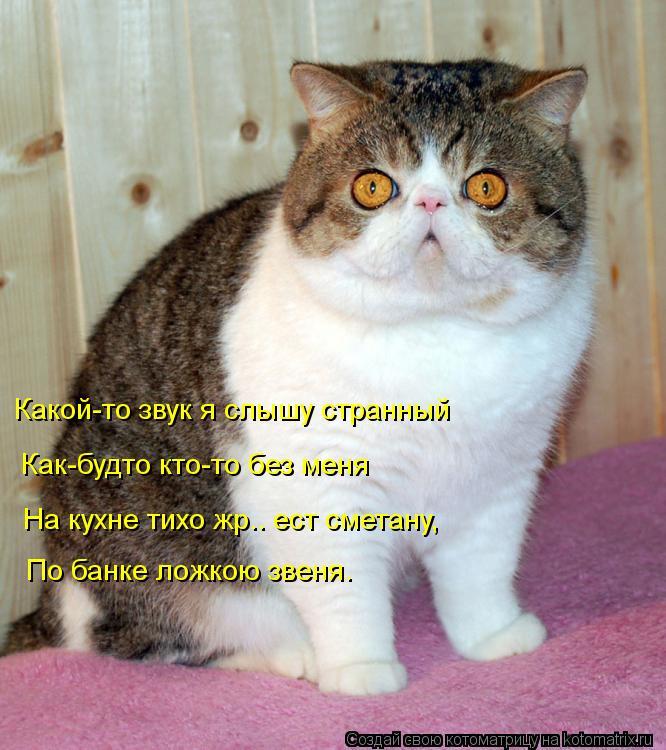 Котоматрица: Какой-то звук я слышу странный Как-будто кто-то без меня На кухне тихо жр.. ест сметану, По банке ложкою звеня.