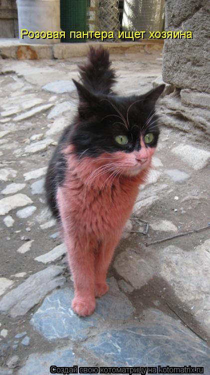Котоматрица: Розовая пантера ищет хозяина