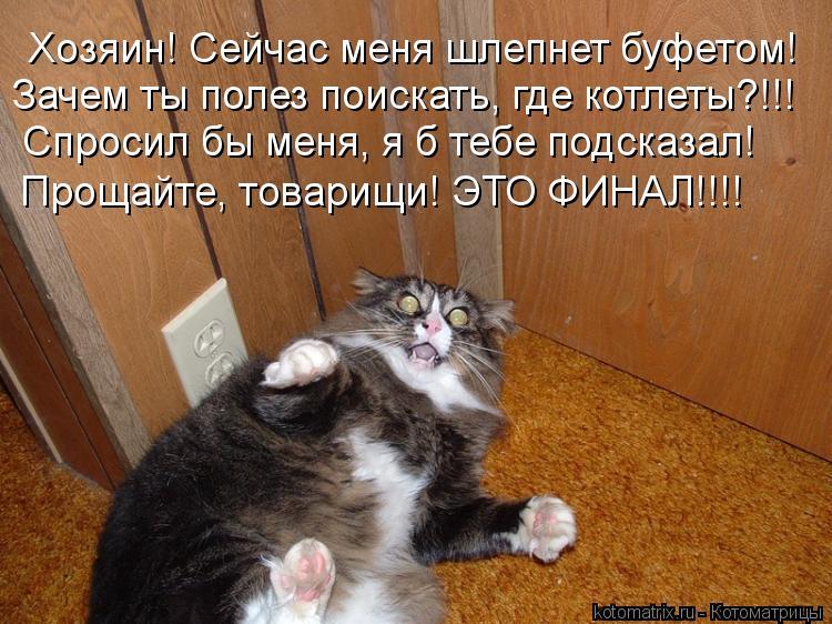 Котоматрица: Хозяин! Сейчас меня шлепнет буфетом! Зачем ты полез поискать, где котлеты?!!! Спросил бы меня, я б тебе подсказал! Прощайте, товарищи! ЭТО ФИНА