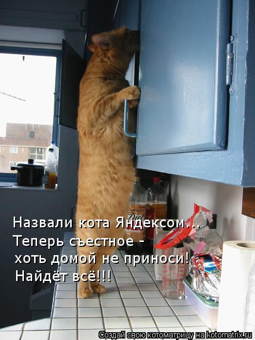 Котоматрица - Назвали кота Яндексом….. Теперь съестное -  хоть домой не приноси! Най