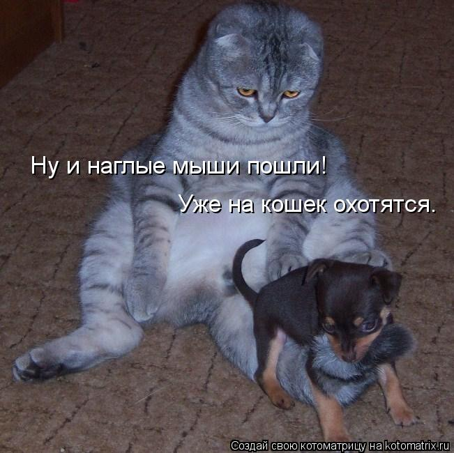 Котоматрица: Ну и наглые мыши пошли! Уже на кошек охотятся.