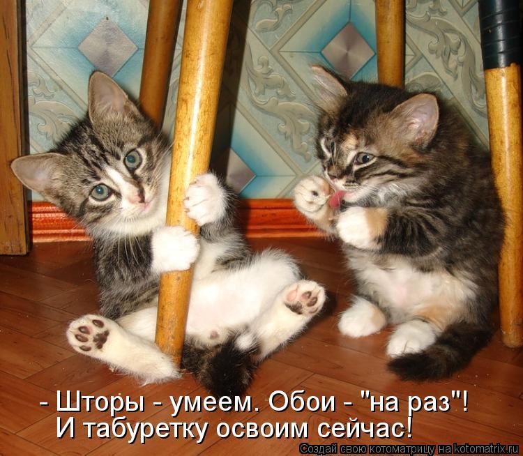 "Котоматрица - - Шторы - умеем. Обои - ""на раз""! И табуретку освоим сейчас!"