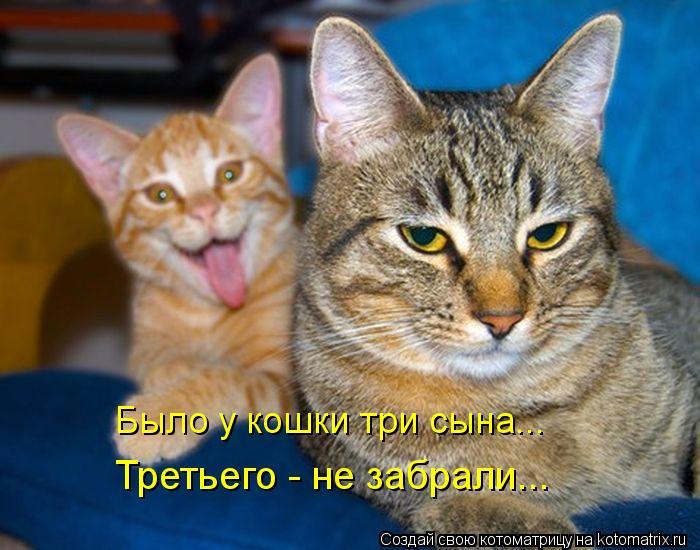 Котоматрица: Было у кошки три сына... Третьего - не забрали...