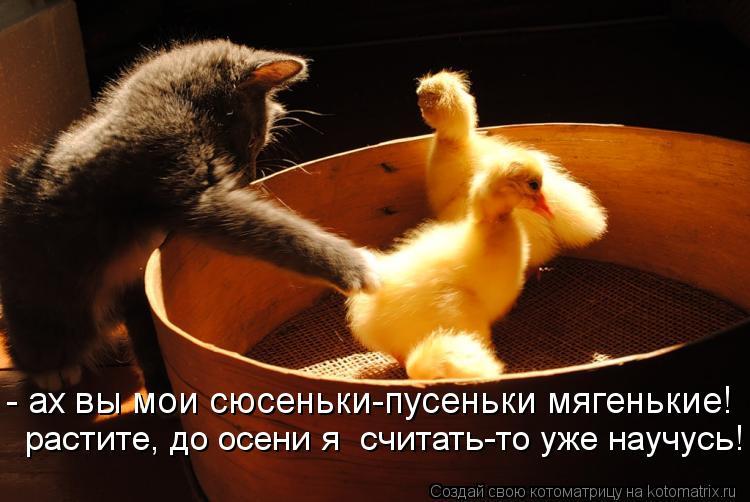 Котоматрица: - ах вы мои сюсеньки-пусеньки мягенькие!  растите, до осени я  считать-то уже научусь!