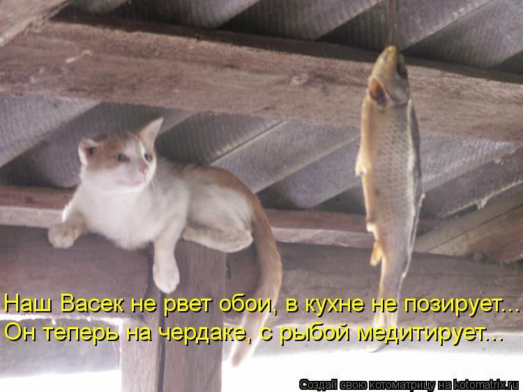 Котоматрица: Наш Васек не рвет обои, в кухне не позирует... Он теперь на чердаке, с рыбой медитирует...