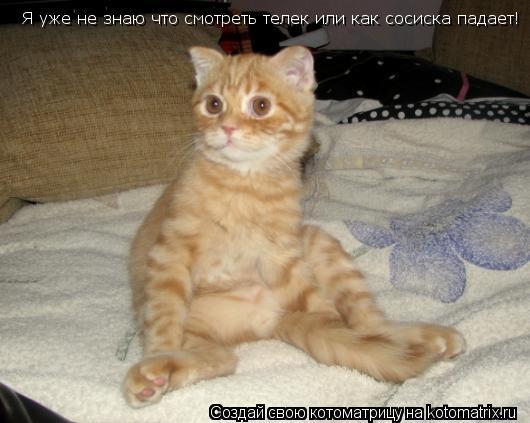 Котоматрица: Я уже не знаю что смотреть телек или как сосиска падает!