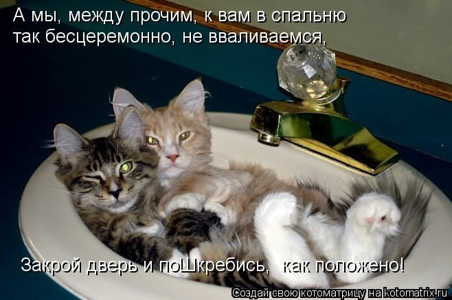 Котоматрица: А мы, между прочим, к вам в спальню  так бесцеремонно, не вваливаемся, Закрой дверь и поШкребись,  как положено!