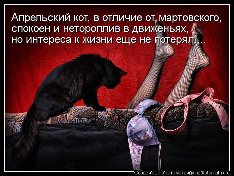 Котоматрица: спокоен и нетороплив в движеньях,  но интереса к жизни еще не потерял.... Апрельский кот, в отличие от мартовского,
